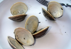 littleneck clam shells