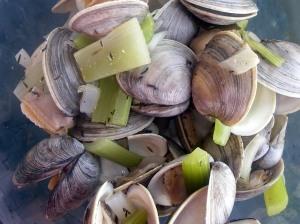 beer-steamed clams