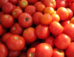 dedham farmers market tomatoes
